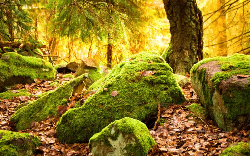 Espíritus del bosque