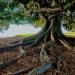 Espíritu guardián de los árboles